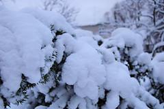 DSC_2798 (aurora0borealis) Tags: november winter tallinn lumi 2008 kodu talv