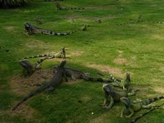 Also known as Parque de Las Iguanas