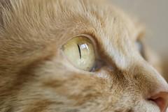 Daylight (summerrunner) Tags: people macro cat nikon taipei qq 60mm nikkor 生活 d80 flickrdiamond overtheexcellence theperfectphotographer