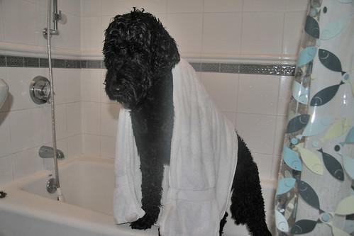 skippy in the tub