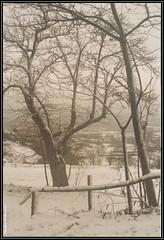 Águas Frias (Chaves) - Paisagem de Inverno (Mário Silva) Tags: neve inverno chaves aldeia trásosmontes ilustrarportugal águasfrias