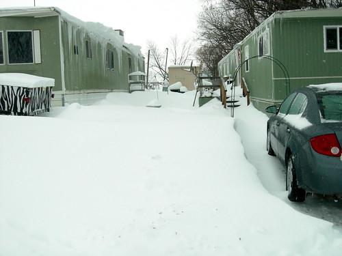 The neighbor's yard