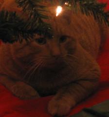Christmas Ike IMG_1199