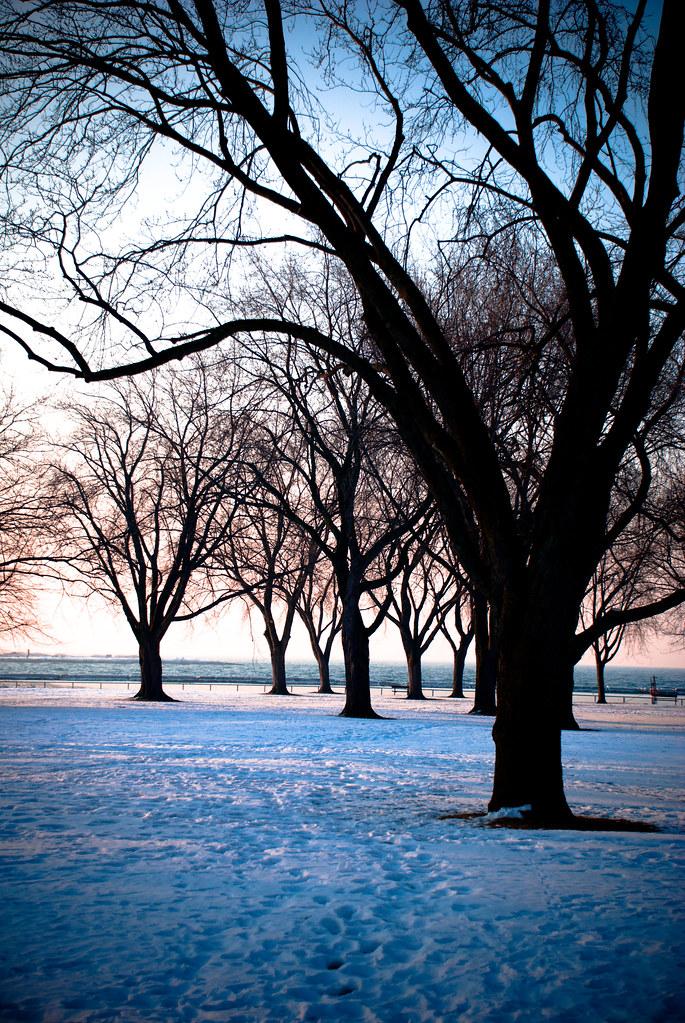 TreesMisc-0172.jpg