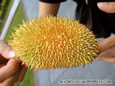 Strange looking fruit