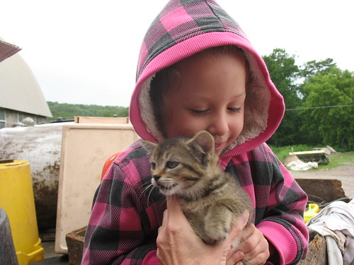 Daisy with a kitten at the dairy farm