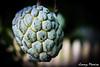 Mosca (Jimmy Moreira Bravo) Tags: verde ecuador fruta mosca manabi portoviejo jimmymoreira