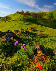 wildflowers and hills (Marc Crumpler (Ilikethenight)) Tags: california flowers trees usa green grass clouds canon landscape hiking trails hills bayarea eastbay ebrpd roundvalley blueribbonwinner contracostacounty eastbayregionalparkdistrict tamron1750 sfchronicle96hours 40d mywinners abigfave ebparks impressedbeauty aplusphoto goldenphotographer diamondclassphotographer flickrdiamond excellentphotographeraward canon40d betterthangood theperfectphotographer simplysuperb goldstaraward ilikethenight marccrumpler ebparksok