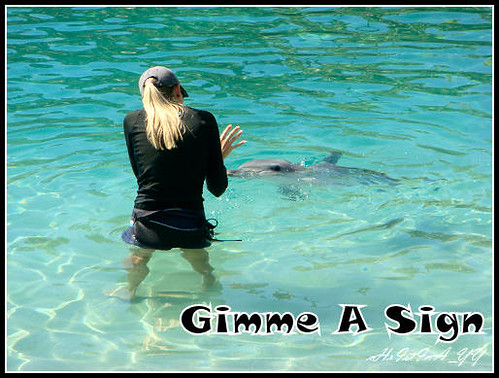 Sea World : Gimme A Sign