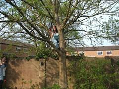 Tree-felling - 2