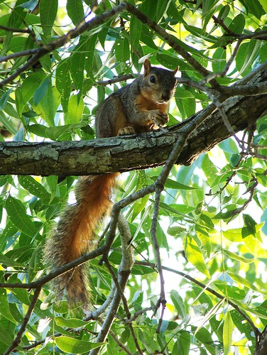 Squirrely squirrel