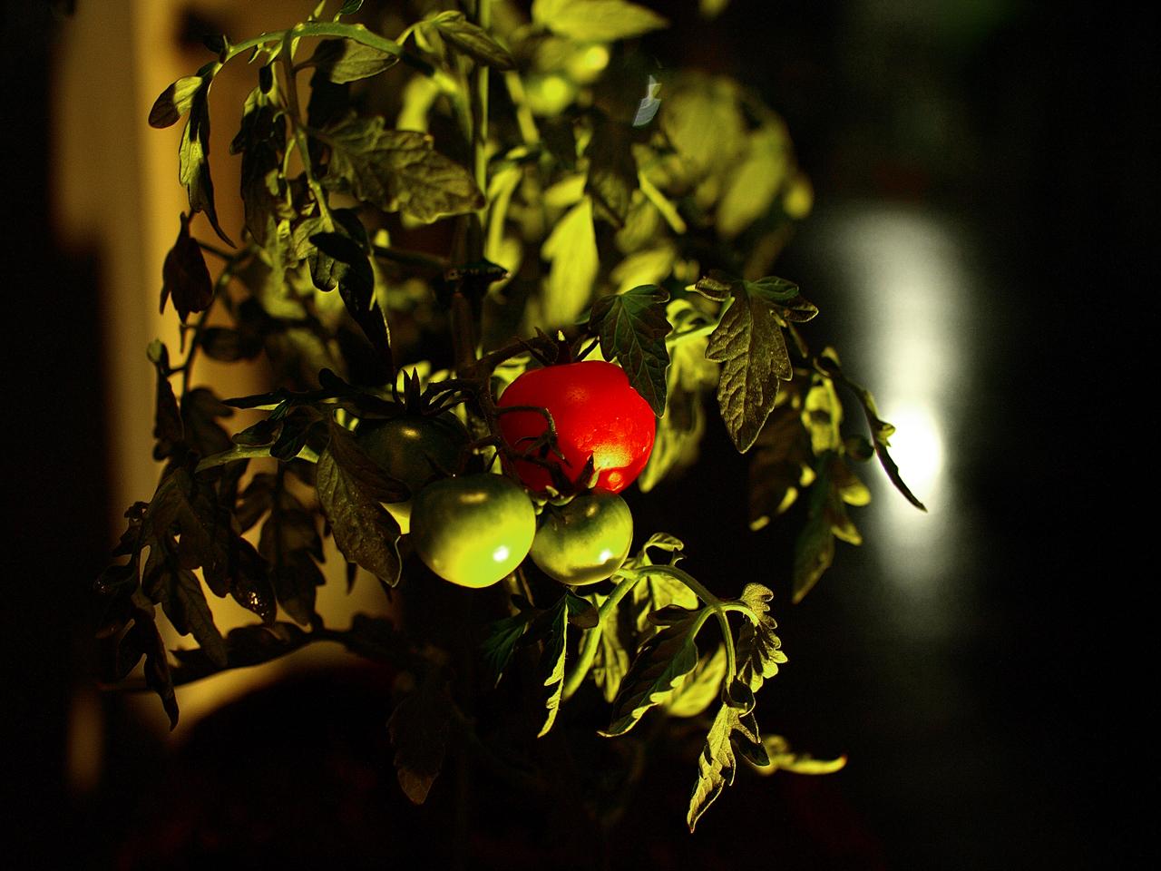 2008-06-21 Tomato