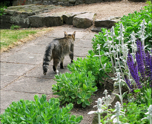 A cat in Oluf Hoest's garden #1
