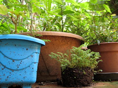 planters on the floor (parttimefarm) Tags: plants brasil garden pots chacara echapora