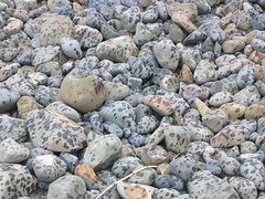 Cannon Beach (Crystalyn Kae) Tags: ocean oregon starfish driftwood mussels cannonbeach haystackrock sandcastle tidepool seaanemone