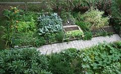 home garden July 14, 2008