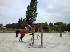 DSC00211 (jacaranda4) Tags: cheval mare du pont dor concours stallion foal cso poulain dressage jument coty radon complet elevage