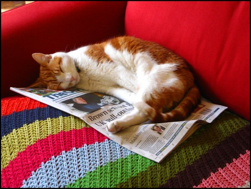 ginger catching up with the news
