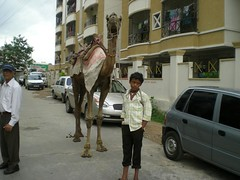 Hyderabad Pictures - Me , my camel and business