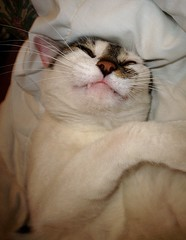 one toof (amberkeee) Tags: morning sleeping pet cat tooth whiskers margaretthatcher
