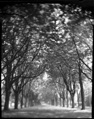 The Chapel, Brussels 2008 (Kal Khogali Photography) Tags: trees chapel rodinal avenue ado largeformat toyo chs50 autaut