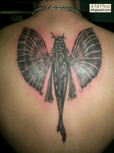 carpa com asas