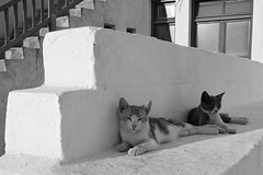 Cats, Mykonos (photos_mweber) Tags: greece griechenland mykonos mikonos