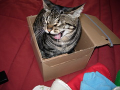 Soninho (Ana Sofia Guerreirinho) Tags: cat mouth box gato