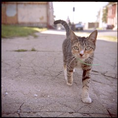 Both Curious (patrickjoust) Tags: city urban usa building abandoned 120 6x6 tlr film analog america cat canon buildings square lens prime us reflex focus flickr kodak decay empty united johnson patrick twin maryland super row baltimore abandon 400 vacant medium format states manual 80 joust decline portra ricoh canoscan johnston rowhouse estados 80mm f35 unidos ricohflex anastigmat autaut 8600f lovelycity cityskip patrickjoust