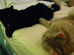 Mancat's hanging out on the bed with Jeni