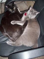 kitties share chair