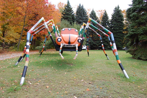 Pennsylvania Yard Spider.