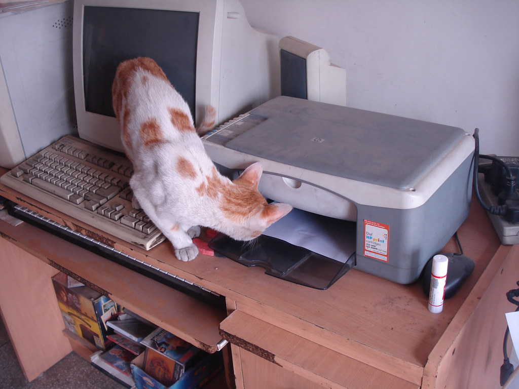 Cat waiting for his printout