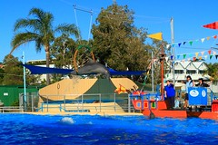 Dolphin (hazzzad) Tags: harbour coffs