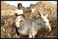 Poor but Proud ! (Bashar Shglila) Tags: boy mountains kid sudan donkey farmer taka galope kassala aplusphoto flickrlovers