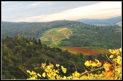 Green, Red, Yellow ... the Vineyards in the Autumn,  Fall in Germany (Batikart ... handicapped ... sorry for no comments) Tags: travel blue autumn red sky orange mountain plant colour green rot fall nature berg leaves lines forest germany landscape geotagged deutschland vineyard interestingness flora europa europe seasons forrest wine linie herbst natur pflanzen himmel vine foliage explore greenery colourful geology grn blau 1001nights blatt leafs 2008 landschaft wald farbe indiansummer wein weinberg a610 f50 geologie badenwrttemberg swabian farbenfroh canonpowershota610 herbstfarben laubbaum herbstfrbung 100faves 50faves 10faves deciduoustree i500 35faves 25faves strmpfelbach viewonblack regionstuttgart superfaveme batikart 201204