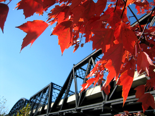 foliage and the hot metal bridge