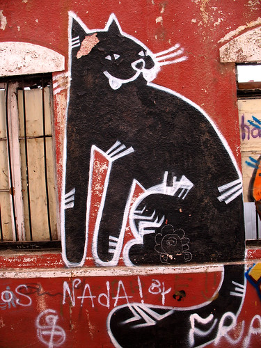 Graf valparaiso black cat