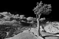 Olmstead Point, Yosemite (flopper) Tags: california mountains tree pine blackwhite yosemite yosemitenationalpark olmsteadpoint flopper