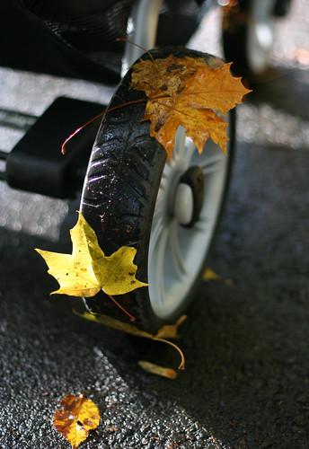 Autumn Colours 08 -5