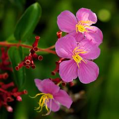 ~ Wild Flowers ~