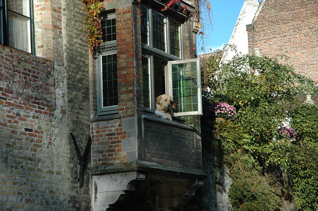Dog watching brugges canal 1