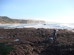 MartinsBeach_2007-031 (Martins Beach, California, United States) Photo
