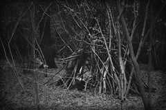 where the witches live (masquerade_arts) Tags: blackandwhite bw monochrome forest dark woods branches creepy spooky essex hatfieldforest bloggedhalloween