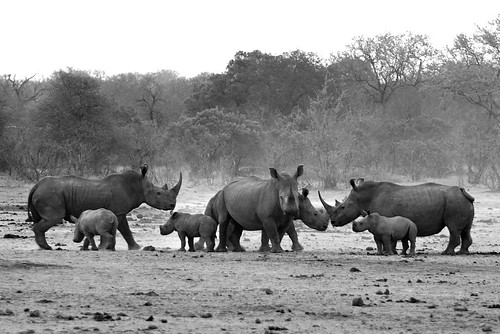 Rhino Nursery