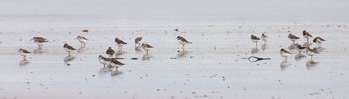 Spot the plover (1)