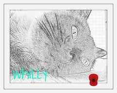 my sweet face!!! (aliywhilly) Tags: cats pets chats kittens gatos gatti catnipaddicts