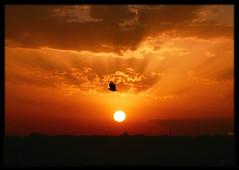 Going Home (Kuzeytac) Tags: light sunset red sky urban orange cloud sun black color colour bird nature silhouette yellow backlight skyscape landscape gold golden evening scenery ray cityscape view bright dusk vivid scene istanbul explore chapeau backlit siluet sunray leyla bulut gökyüzü manzara günbatımı güneş sarı lsi ışık kırmızı portakal renk doğa tabiat siyah altın şehir canoneos400d canoneosdigitalrebelxti kuzeytac copyrightedallrightsreserved aqualityonlyclub