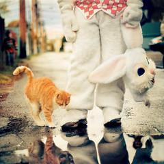 (Benoit.P) Tags: street pet canada color cute bunny water cat book costume chat eau mood montréal benoit mtl quebec kitty vivid reflet troisrivieres ruelle bp animaux mauricie tr paille troisrivières artlibres benoitp benoitpaille steangèle thecatwhoturnedonandoff