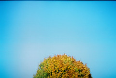 (MilkyAir) Tags: sky tree nature analog poland polska simple praktica mtl3 milkyair